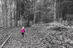 L'appel de la forêt. (Rouvier Jean Pierre) Tags:
