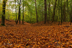 Autumn | Herfst Leuvenum (Leo Kramp) Tags: web jaargetijden leokrampfotografie focusstacked leuvenumsebossen herfst manfrotto410juniorgearedhead wwwleokrampfotografienl accessoires photography nederland gitzogt3542ltripod plaatsen technieken 2019 2010s data accessoiries autumn netherlands places ermelo gelderland sets 3fotos