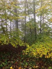 Autumn forest in fog, Felsenegg, Canton of Zürich, Switzerland (rickwarner) Tags: balderan switzerland cantonofzürich adliswil felsenegg fog