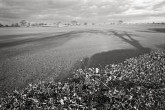 Marton, March 1997 (Paul of Congleton) Tags: marton cheshire england uk field hedge tree shadows sunlight olympus om4ti 35mm monochrome blackandwhite film