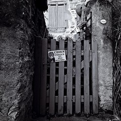 Chien féroce et peu nourri (Un jour en France) Tags: chien dog portail entrée humour canoneos6dmarkii canonef1635mmf28liiusm carré square noiretblanc noiretblancfrance monochrome black