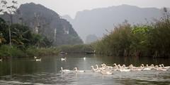 Los patos (rraass70) Tags: canon d700 rio agua ninbinh deltadelriorojo vietnam