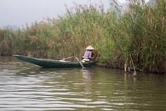 Recogiendo hierbas (rraass70) Tags: canon d700 rio agua ninbinh deltadelriorojo vietnam