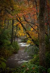 11.1.19 F (steveowen2725) Tags: pisgahnationalforest rain autumn stream