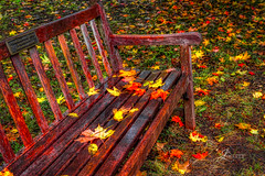 Fall Leaves on a Bench (JuanJ) Tags: nikon d850 lightroom art bokeh lens light landscape happy naturephotography outside nature people white green red black pink skyportrait location architecture building city square squareformat instagramapp shot awesome supershot beauty cute new flickr amazing photo photograph fav favorite favs picture me explore interestingness friends dof sunset sky flower night tree flowers portrait fineart sun clouds fall autumn leave leaves grass colors kentucky henryclayestate henryclay bench