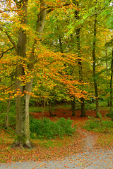 Shades of Autumn (Drew Scott :))) Tags: outdoor nature autumn forest wood woods tree trees leaves colour path track trail plants nikon d3200 nikkor 35mm f18 bark moss branch