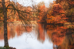 03112015-_DSC0009 (vidjanma) Tags: rolley automne étang