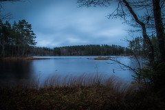 Gloomy days (mabuli90) Tags: finland lake water dark forest tree autumn fall night dusk blue grass nature landscape