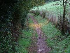 Gold flakes (Phil Gayton) Tags: path track trail tree hedge foliage fence undergrowth grass leaf autumn fall golden dart valley totnes devon uk