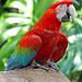 Brazil-01632 - Scarlet Macaw