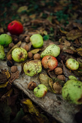 Autumn vegetables apple, nut, and pears. (shixart1985) Tags: autumn vegetables wooden rustic healthy food decoration nature outdoors nobody concept art protein