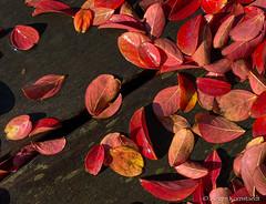 Autumn sun after the rain (Jürgen Kornstaedt) Tags: 11pro iphone colomiers départementhautegaronne frankreich