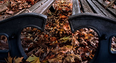 autumnal heart (mare_maris) Tags: heart leaves bench autumn automne feuillesbanc coeur otoño hojas banco corazon autunno fogliame panchina cuore herbst verlässt bank herz 秋天 叶子 长凳 心, осень листья скамейка сердце φθινόπωρο φύλλα παγκάκι καρδιά nature beauty beautiful fallen fall foliage maremaris ninon photography flickr vivid colours colors shapes season seasonal benchpark leaf benches automnal botany colorful countyside picturesque scene idyllic outdoor retro old two day landscape natural abreast art emotion symbols heartshape openheart november