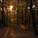 October Lights