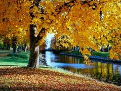 Autumn (Geir Bakken) Tags: mamiya mamiyarb67 kodak kodakektar tree water canal sunset landscape mediumformat 120film 120 vintagecamera analog analogphotography film filmisnotdead filmphotography filmcamera filmisalive