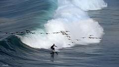 Secret des vagues (Armelle85) Tags: extérieur nature mer océan sport surfer oiseau cormoran vague nazaré portugal