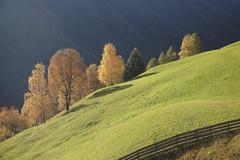 585201910cTIRES_001 (GIALLO1963) Tags: trees europe italy altoadige sudtiröl dolomiti dolomites dolomiten rosengarten catinaccio canoneosr alps landscapes ngc nature fall autumn mountains