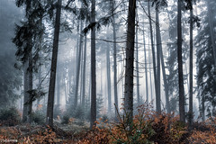 07112017-DSC_2842 (vidjanma) Tags: arbres automnesapins brume matin