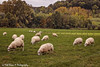 20191027-4123-Stokhem-bw (Rob_Boon) Tags: heuvelland landscape on1 schaap stokhem robboon