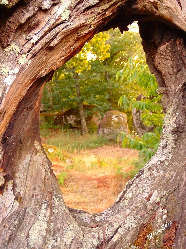 Águas Frias (Chaves) - ... observando a paisagem por um buraco natural de um velho castanheiro ...