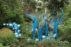 Kew Gardens - Dale Chihuly exhibition (vireyauk) Tags: kewgardens dalechihuly kew chihuly turquoisemarlinsandfloats reflectionsonnature glass temperatehouse exhibition