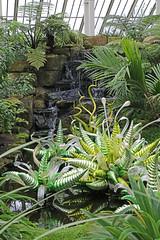 Kew Gardens - Dale Chihuly exhibition (vireyauk) Tags: kewgardens dalechihuly kew chihuly temperatehouse greenhornetsandgoldwaterdrops glass reflectionsonnature exhibition