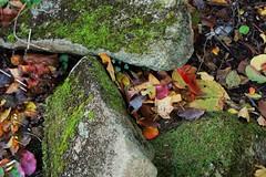 Mossy Stones (mdhwrites@verizon.net) Tags: stone cf19