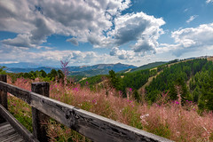 Over the fence (Artur Tomaz Photography) Tags: wood blue trees green nature grass clouds alpes fence landscape sky valberg
