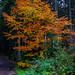 Herbstbaum am Eisweiher