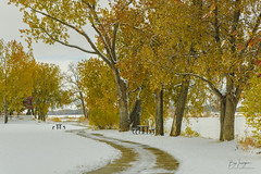 Snowy Autumn Day (Striking Photography by Bo Insogna) Tags: autumn trees winter snow fall colorful seasons foliage collide pink red green nature leaves yellow landscapes colorado stream wallart artprints bouldercounty jamesinsogna park morning snowy longmont citypark boinsognacom a7rll sonya7rll