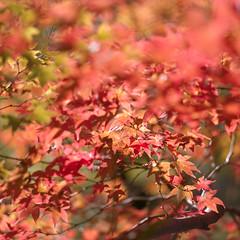 (Andrew :-)) Tags: bronicasqa kodakportra400 mediumformat winkwortharboretum autumn