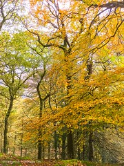 Cat Bell, Lake District, England (cattan2011) Tags: mountains mou forest exploringtheuk travelbloggers traveltuesday travelphotography travelphoto travel autumn woodland trees natureperfection naturephotography nature landscapephotography landscape england lakedistrict catbell