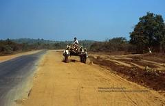 near Kyaiktiyo, Burmese road (blauepics) Tags: myanmar birma burma southeast asia südostasien 1996 yangon kyaiktio kyaiktiyo burmese street strasse lane bahn oxcarts ochsenkarren poverty armut farmer bauern traffic transport verkehr