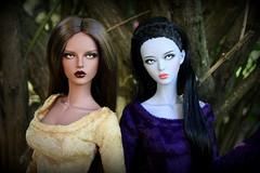 Misceo Girls (wizgerg3) Tags: raccoondoll monica gene sabia shyama shy