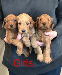 Carly Girls 11-1