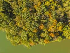 Colors at the Lake (Yer Photo Xpression) Tags: ronmayhew djimavicpro lakelanier aerial trees fall water lake