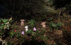 20191101-DSCF6704-C1 (Larry Moberly) Tags: santaclara california unitedstates smileonsaturday mushrooms