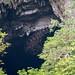 Faltenlippenfledermäuse sammeln sich vor der Deer cave bevor sie die Höhle verlassen | Wrinkle-lipped free-tailed bats (Tadarida plicata) im Gunung Mulu Nationalpark, Borneo