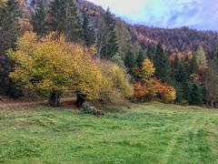 Autumn forest in Breitenau near Kiefersfelden, Bavaria, Germany (UweBKK (α 77 on )) Tags: autumn autumnal fall herbst tree forest wald baum bavaria bayern germany deutschland europe europa iphone breitenau landscape landschaft view scene scenic scenery grass green field meadow