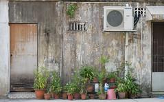 Anglų lietuvių žodynas. Žodis backyard reiškia n  kiemas už namo, užpakalinis kiemas 2 amer. daržas/sodelis kieme už namo lietuviškai.