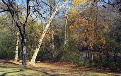 Leica iii_004 (tcd123usa) Tags: leicaiii kodakmax400 elmar50mmf35 autumn2019