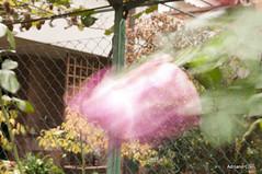 _DSC1401 (Adriano Clari) Tags: fiori flowers mosso giardino garden esperimenti adriano clari erba sfocato macro linee trama campo