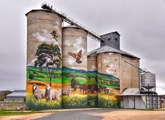 Australian country by numbers! (John from Brisbane) Tags: mural grenfellsiloart grenfell siloart