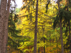 Along the Spruce Arm (Bruces 51) Tags: whiting forest canopy walk dow gardens midland michigan