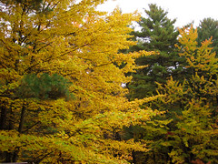 treetops (Bruces 51) Tags: whiting forest canopy walk dow gardens midland michigan