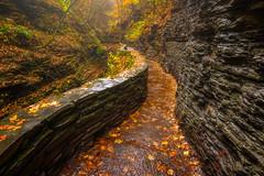 Autumn's Path (Darren White Photography) Tags: fallcolors hiking new york newyork sigmalenses darrenwhitephotography watkinsglenn