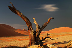 Dead Tree (HWHawerkamp) Tags: outdoors nature no people tranquil scene landscape scenics sky tree grass beauty in desert cloud sossusvlei namib namibia travel