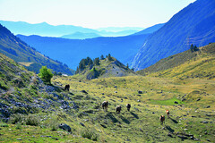 Ponies in the Pyrenees