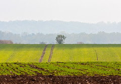 Layers (Dumby) Tags: landscape ilfov românia autumn fall field nature outdoor layers canoneos40d