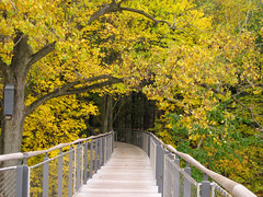 Through the forest canopy (Bruces 51) Tags: whiting forest canopy walk dow gardens midland michigan